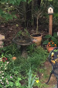 decoration videos It a hot one in Nova Scotia today. Even the birds are lining up to cool off 🐦 Nova Scotia, Backyard Water Feature, Backyard Playground, Winter Garden, Garden Projects, Surfers, Bird Houses, Garden Inspiration, Backyard Landscaping