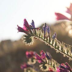 Hay algo en el movimiento natural de las flores que me hipnotiza.  Adoro a l@s floristas que en cada uno de sus trabajos (pequeños o grandes) hacen un homenaje a la naturaleza. Poco a poco me gustaría ir hablando de algunos de mis favoritos y así aprender e inspirarnos todos verdad? . . . . . . . . . . #enelbosque #enelbosqueflorece #flowers #flores #flower #flor #naturaleza #nature #naturelovers #plantslovers #plantas #plants #spring #primavera #luz #atardecer #sunset #sun #playa #instagood…