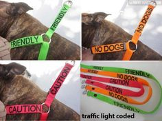 Traffic light coded leashes...