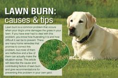 How to Prevent a Dog's Urine From Burning the Grass - See more at: http://mylifewithpets.com/how-to-prevent-a-dogs-urine-from-burning-the-grass/