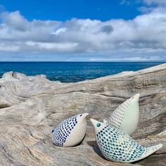 Im all aflutter with excitement! The amazing brilliant and talented is hosting a workshop right here on the Big Island starting tomorrow absolutely cant wait! Big Island, Cant Wait, Workshop, Porcelain, Ocean, Ceramics, Amazing, Instagram, Atelier