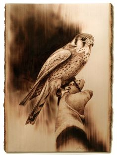Wood Burned Kestrel on Glove by Dennis Franzen