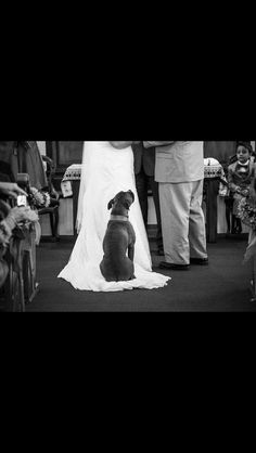 Love this photo Golden Retriever, Dogs In Wedding, Weddings With Dogs, Dog Wedding Dress, Cute Dogs, I Love Dogs, All Dogs, Dogs And Puppies, Puppy Love