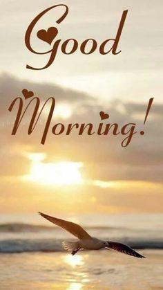 Good Morning Happy Friday, Morning Wish, Good Morning Quotes, Buddha Meditation, Morning Images, Good Morning Wishes, Good Morning Images