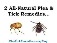 2 All-Natural Remedies for Flea's & Tick's