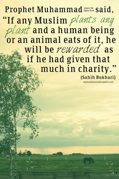 "Prophet Muhammad (peace and blessings of Allah be upon him) said, ""If any Muslim plants any plant and a human being or an animal eats of it, he will be rewarded as if he had given that much in charity."""