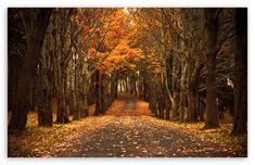 Autumn, fall, fall colors, September, October, November, leaves, trees, nature, path, a walk in the woods