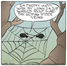 Break of Day by Nate Fakes Friday, September 2014 Funny Animal Comics, Break Of Day, Funny Google Searches, Cool Sculpting, Phobias, Humor, Comics Online, Spider, Cartoons