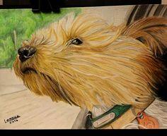 Silky Terrier, Love People, Yorkshire Terrier, Yorkie, Cute Puppies, Friends, Yorkshire Terriers, Amigos, Yorkies