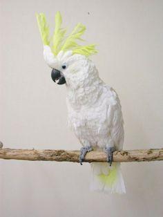 Cockatoo -  Lesser Sulphur Crested Cockatoo, Creatures, Birds, Parrots, Animals, Animaux, Bird, Animal, Animales