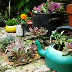 more container gardening....I actually have an old soup pot just like this one! rust and all! Gonna try this....
