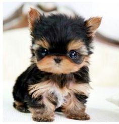 Adorable Precious