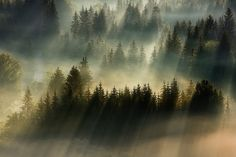 In that brief window of time when the foggy remnants of night clash with the rays of early morning sun, photographer Boguslaw Strempel positions himself atop high mountain peaks to capture these beautiful landscapes around Poland and the Czech Republic. Fog Photography, Morning Photography, Stunning Photography, Landscape Photography, Creative Photography, Photography Series, Photography Ideas, Foggy Mountains, Foggy Forest