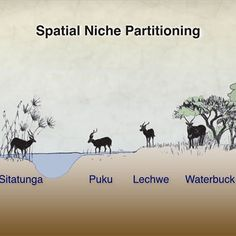 Screenshot of niche partitioning slide