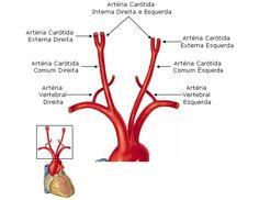 Aula de Anatomia | Sistema Arterial
