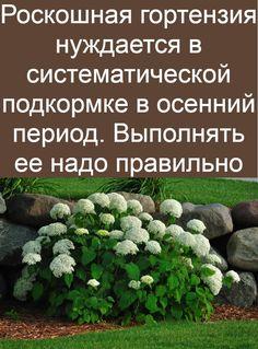 Sprouts, Vegetables, Princess, Garden, Plants, Diy, Gardening, Bricolage, Veggies