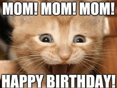Are you searching for the best excited meme? Here you got the best Excited meme that makes you feel good. These are the best I am excited meme. Excited Cat, Happy Birthday Mom Meme, Cat Birthday, Birthday Memes, Birthday Stuff, Funny Cats, Funny Animals, Cute Animals, Kitty Cats