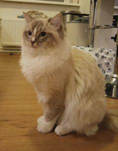 Levi (bijna 1 jaar oud) Cats, Animals, Gatos, Animales, Animaux, Animal, Cat, Animais, Kitty