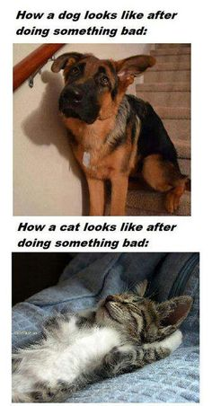 Bad Dog!  Bad Kitty!!