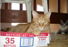 Working cat parents often worry about their cats being bored when left home alone all day, then becoming mischievous and destructive. Toys like catnip cigars, a talking ball, or a Birdland DVD will keep cats happy and out of trouble.: Cardboard Boxes