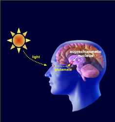 Psychology journal articles on sleep disorders Sleep Lab, Disorders, Articles, Maps, Movie Posters, Google Search, Blue Prints, Film Poster