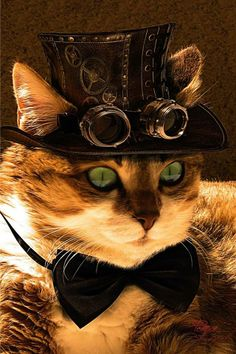 Steampunk Cat | Happy Caturday