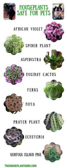 Pet friendly Houseplants (3)