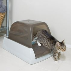 ScoopFree™ is the self-cleaning litter box you can leave alone for weeks at a time. Simply plug in the box and watch it work. The automatic rake system sweeps waste into the covered compartment or 20 minutes after your cat uses the litter box. Automatic Litter Box, Self Cleaning Litter Box, Cat Litter Tray, Cat Ages, Pet Shop, Cat Love, Your Pet, Dog Cat, Kittens