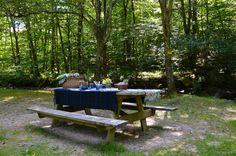 Linda's beautiful & serene picnic spot by a woodland stream