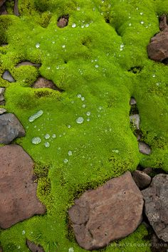 Wet moss for easy drinking of water or washing out wounds.