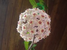 Tattoos For Women Flowers, Plant Fungus, Fungi, Decoupage, Planters, Rose, Gardening, Future House, Green