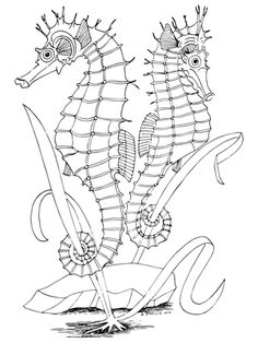Click To See Printable Version Of Two Seahorses Coloring Page