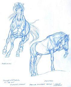 Horse muzzle |anatomy study| by HorRaw-X.deviantart.com on ...