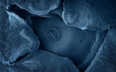 Blueberry as photographed with an electron microscope - cool!  #berryblue