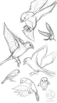 40 Free & Easy Animal Sketch Drawing Information & Ideas - sketching Sketch Drawing sketch drawing ideas Pencil Art Drawings, Bird Drawings, Art Drawings Sketches, Easy Drawings, Sketch Drawing, Drawing Ideas, Sketch Ideas, Drawing Tips, Inspiration Drawing
