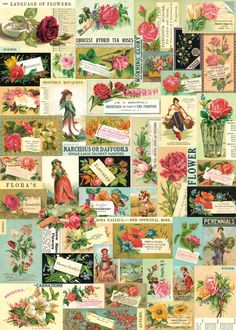 Cavallini & Co. Floral Ephemera Decorative Paper Sheet | eBay