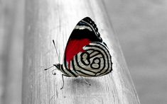 Love the colors on this butterfly, have to make an outfit with the same color scheme!
