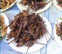 Micronutris, premier élevage d'insectes comestibles est français