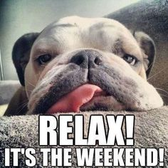 Hope your all recharging the batteries and having a lovely relaxing weekend. Weekend Fun, Happy Weekend, Weekend Humor, Weekend Events, Friday Weekend, Monday Friday, Happy Saturday, Funny Saturday Memes, Dog Memes