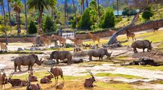 San Diego Zoo Safari Park is a Wildlife Park in Escondido. Plan your road trip to San Diego Zoo Safari Park in CA with Roadtrippers. Visit San Diego, San Diego Zoo, Voyage Usa, Wild Animal Park, Wild Animals, Voyager Seul, Best Travel Sites, Destinations, San Diego Travel