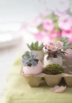 Succulents and min-Afican Violets planted in dyed egg shells... Cute Easter centerpiece idea.