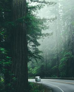 A 1977 Volkswagen Westfalia in Redwoods State Park, California