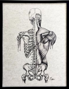 Anatomy Study, Bones And Muscles, All Print, Pilates, Personal Style, Skull, Studio, Drawings, Illustration