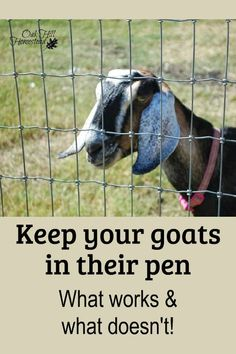 Keep your goats secure and safe in their pen. Don't waste your money on fencing that doesn't work. This is the goat fencing that works for us - and a list of what hasn't worked. Raising Farm Animals, Raising Goats, Raising Cattle, Goat Fence, Goat Shelter, Animal Shelter, Goat Playground, Keeping Goats, Show Goats