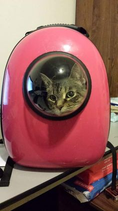 And they can sit back and just enjoy the view.   Now You Can Take Your Cat Literally Everywhere With This Genius Pet Carrier