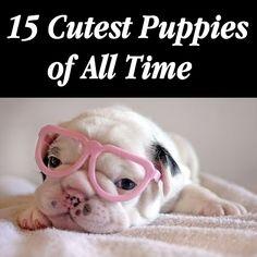 World's+Cutest+Pups
