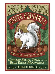 Brevard, North Carolina - White Squirrel Print by Lantern Press at AllPosters.com