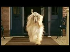 """Great afghan commercial. Better than Audi's """"release the hounds""""."""