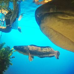 【reggaekaze】さんのInstagramをピンしています。 《鳥羽 水族館 gopro  #today #l4l #gopro #goproのある生活 #goprojp  #鳥羽 #三重 #japan #goprohero5 #海 #fish #sea #mar #love #yolo #look #follow  #like4like #f4f  #tagsforlike #tflers #instagood #fun #photooftheday》
