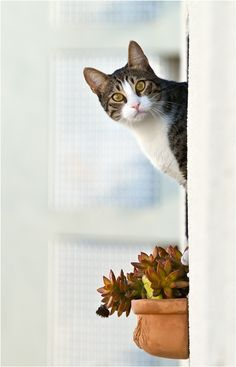 Hey...There you are...uh my cat box could use some attention...oh you know...That's why you are out here...Fresh air?...